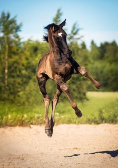 So cute Tiere - Horses Funny - Funny Horse Meme - - So cute Tiere The post So cute Tiere appeared first on Gag Dad. Funny Horse Pictures, Beautiful Horse Pictures, Horse Photos, Beautiful Horses, Animals Beautiful, Baby Animals, Funny Animals, Animals And Pets, Cute Animals