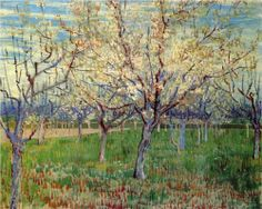 Orchard with Blossoming Apricot Trees  - Vincent van Gogh