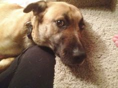 This dog is being fostered with New Hope Dog Rescue (Saskatoon).  If you are interested in adopting please fill our Adoption Application. Meet and greet are by appointment only.Molly is a friendly dog that loves hugs. She is a little shy at first...