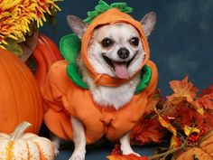 Halloween Parque Shopping tem programação especial para os pets | Notícias |