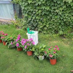 Automatic Watering Irrigation System Water With Smart Controller Pump Inside New