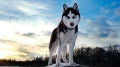 Wild Animals Wallpaper HD | Wallpapers, Backgrounds, Images, Art ...