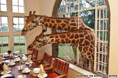 10 things you probably didn't know you can do in Kenya | CNN Travel