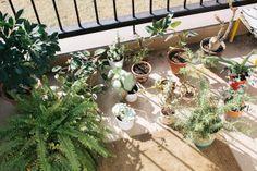 sunbathing by Daisuke Kanie Need Supply Co, Photographs, Coast, Dreams, Plants, Photos, Plant, Planets