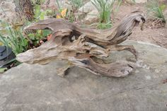 A personal favorite from my Etsy shop https://www.etsy.com/listing/274645208/driftwood-sculpture-created-by-water