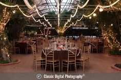 Boojum Tree Wedding Photos  | Image by Classic Digital Photography®, LLC, Gilbert, Arizona