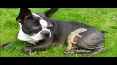 Gecko climbing FAIL