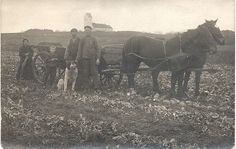 Vintage farm scene by Woof Nanny, via Flickr