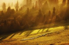 Morning grazing by Paweł Uchorczak on 500px