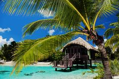 Bora Bora! I wanna stay in this hut!