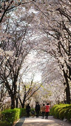 벌터산공원, 경기도 성남시 수진동, 2013.4.18