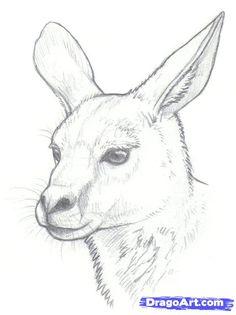 Kangaroo Drawing Outline | how to draw kangaroos step 8