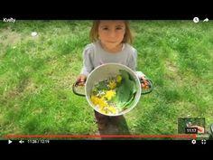 10 květnových jedlých květů I Síla pro život - YouTube Cotton Candy, Youtube, Cotton Candy Favors, Youtubers