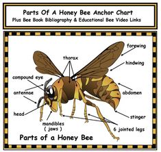 Parts of a Honey Bee Anchor Chart With Bibliography & Video Links Insect Activities, Alphabet Activities, Sequencing Activities, Bee Games, Math Games, Puzzle Games, Book Bibliography, Honey Bee Life Cycle, Life Cycle Craft