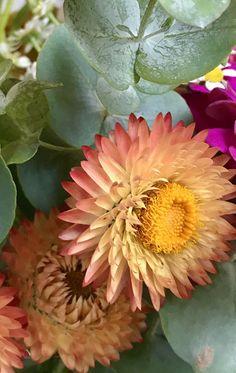 Bright Flowers, Love Flowers, Eucalyptus Garland, Orange Pink, Silver Dollar, Wildflowers, Daisy, Garden, Plants