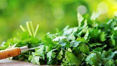 Obyčejné droždí je jedním z nejúčinnějších prostředků pro silné a lesklé vlasy - FarmaZdravi.cz Comment Planter, Detox Your Body, Coriander Seeds, Herbal Medicine, Organic Skin Care, Spice Things Up, Vegans, Alternative Medicine, Herbs
