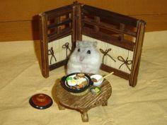 hamster bamster