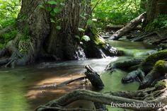 Bach im Wald - Bachlauf in der Natur