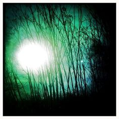 """""""You Are Not the Moon"""" poetry by Melissa Donovan. SUN THROUGH FENNEL art by Allyson Seconds."""