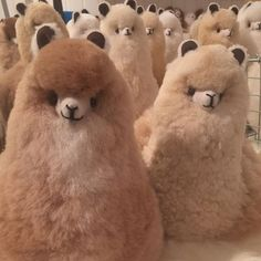 look like stuffed animals! Fluffy Cows, Fluffy Animals, Animals And Pets, Cute Animal Photos, Funny Animal Pictures, Cute Pictures, Cute Little Animals, Cute Funny Animals, Alpacas