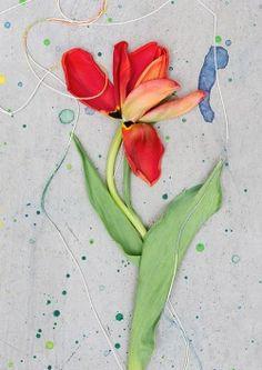 & Amp;  Otras historias | Con cada flor, que van a obtener un poco más cerca de la primavera.