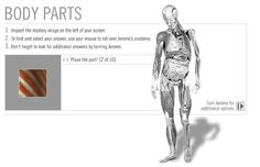 Anatomy: Human Body: Body Parts: quiz online from NMAH