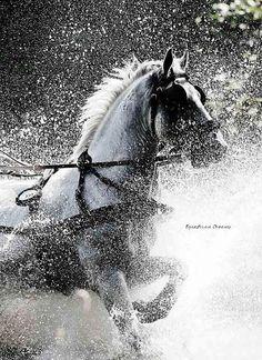 #Fieracavalli #cavallo #horse