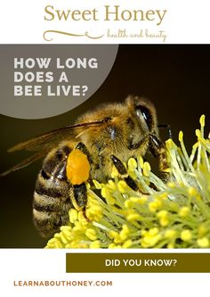 https://learnabouthoney.com/how-long-does-a-bee-live According to the responsibility inside the colony, the lives of honey bees can vary. The role of a bee, in addition to the period of time of year in which it was birthed (spring/summer or fall), will as well play a role to worker bees in the colony.