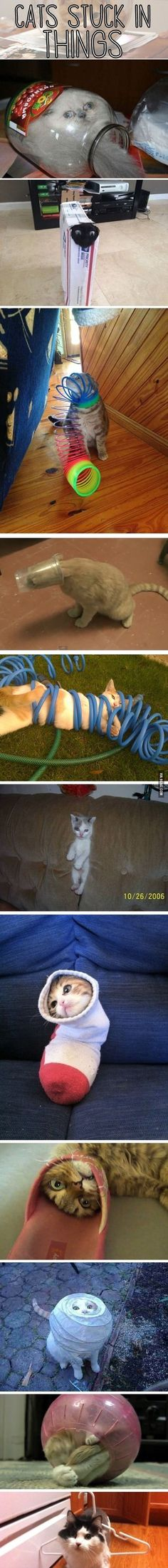 What a predicament - Cats stuck in stuff