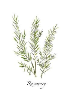 Rosemary print (downstairs bath).