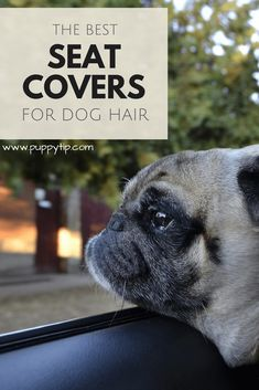 Car seat covers are a must-have if you have a dog that leaves hair all over the place! These are out top best seat covers for dog hair. Best Seat Covers, Dog Seat Covers, Dog Grooming Tips, Dog Grooming Business, Big Dog Little Dog, Training Your Puppy, Old Dogs, Dog Behavior, Happy Dogs