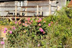 Galeria zdjęć - Perch Hill Farm - w ogrodzie Sarah Raven - Ogrodowisko
