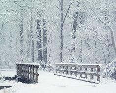 Winter Woods with Bridge Photograph 8x10 Fine Art  by Briole, $30.00