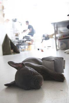 product tester at Go Pet Designs: Remodelista #graspthemoment #sleepypuppy