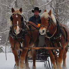 Draft horses in snow. In Park City. It was beautiful!