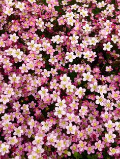 Okan Çelebi - Okan Çelebi Best Picture For diy furniture For Your Taste You are looking for something, and it - Cute Backgrounds, Cute Wallpapers, Wallpaper Backgrounds, Whats Wallpaper, Nature Wallpaper, Aesthetic Iphone Wallpaper, Aesthetic Wallpapers, Beautiful Flowers, Beautiful Pictures
