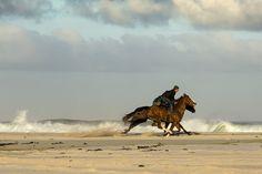 Beach, Horses, Beach, Racing #beach, #horses, #beach, #racing