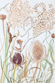 Meadow Grasses with Teasel - watercolour drawing by Angie Lewin - printmaker