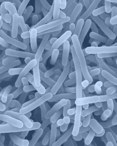 Listeria monocytogenes. Microorganisms carrying radioactive antibodies that infiltrate and kill cancer tumors and cells. Aladar A. Szalay, Department of Radiation Oncology at UC San Diego Moores Cancer Center.