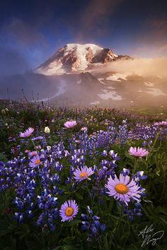 beautiful flowers & Mt. Rainier