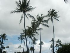 Sky view from Hickam Air Force Base. Beautiful Palm Tree's swaying while the breeze passes through! On Oahu, Hawaii