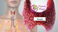 """Tiroid hormonlarının tüm vücudu etkiler, tedavilerin hayati bir parçasıdır. """"Metabolizmamız büyük oranda tiroidimizin düzgün çalışmasına bağlı.Sindirime, pankreas fonksiyonuna, beyin fonksiyonuna, diğer tüm hormon üretim süreçlerine ve bunları üreten salgı bezlerine hücrelere yeterli miktarda oksijen veya enerji almazsak, her şey yavaşlar ve yavaşlar. Bununla birlikte, hormonların dengesizliği, yaşam biçiminde bazı önemli değişiklikler yaparak normale döndürülebilir.Başlangıçta çiğ …"""