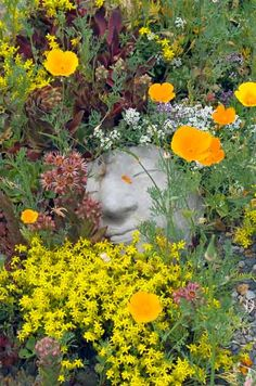 Drought resistant flowers and plants.