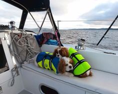 PAWS Aboard Pet Life Jackets and Designer Pet Life Jackets provide ultimate buoyancy and high visibility to keep pets safe in or around the water. Constructed to provide buoyancy, along with a cozy secure fit, the PAWS Aboard Pet Life Jackets available at our online boutique www.zoedoggy.com