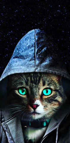 Cat wallpaper by MartGee - 6147 - Free on ZEDGE™