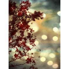 Tree, Nature, Sky, Landscape, Bokeh Nature Photography, Dark Red,... ($15) ❤ liked on Polyvore featuring home, home decor, wall art, landscaping trees, gold home decor, cranberry tree, tree wall art and landscape wall art