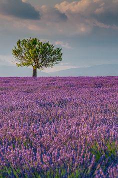 Valensole, Provence