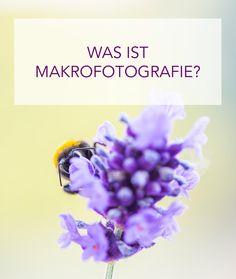Eine Einführung in die Welt der Makrofotografie
