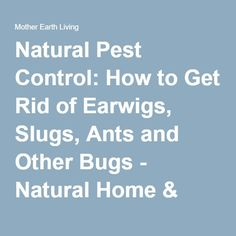 1000 Ideas About Earwig Control On Pinterest Earwigs