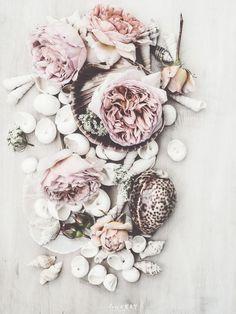 roses & seashells {pretty color palette}